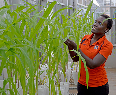 Auburn researcher, world hunger advocate Esther Ngumbi makes a difference in Africa and beyond